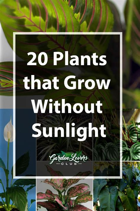 plants  grow  sunlight plants indoor