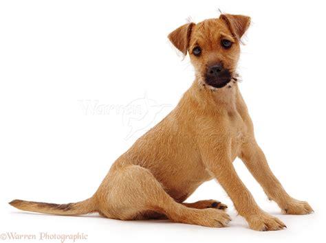 puppy puppy puppy sitting photo wp04102