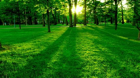 Imagenes De Paisajes Verdes Para Pantalla | fondos de pantalla de paisaje super verde tama 241 o 1024x768