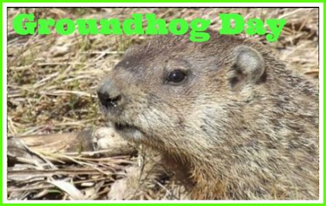 groundhog day type groundhog baby animal facts encyclopedia