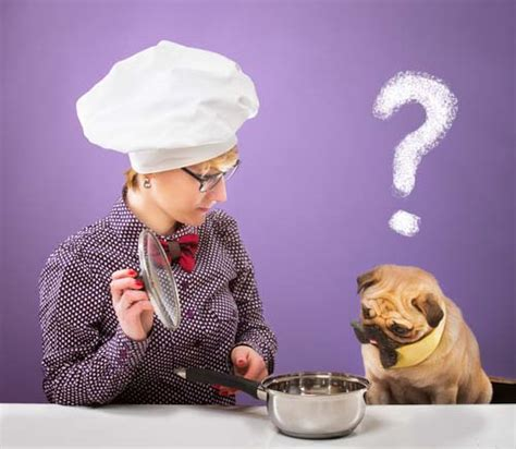 is grain bad for dogs 32 food and feeding myths debunked by science infographic