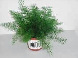 Foliage Indoor Plants - black thumb daeja s view