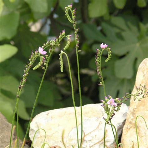 Pflanzen Shop 894 pflanzen shop pflanzen shop farn mix 3 pflanzen