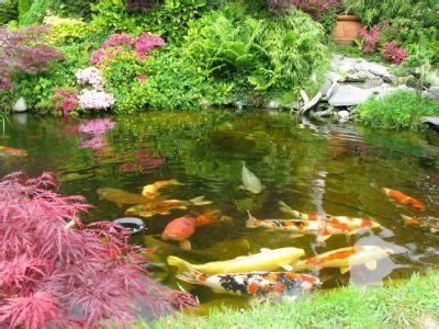 Good Backyard Pets Plants For Koi Ponds Lovetoknow