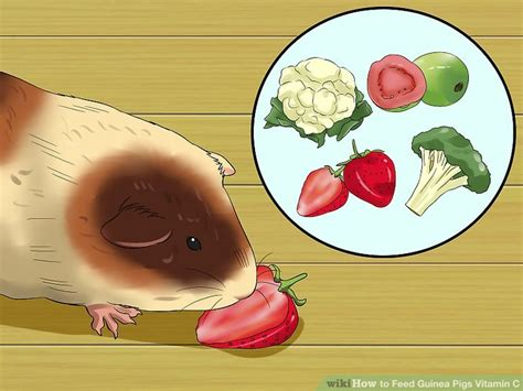vitamin c vegetables for guinea pigs 3 ways to feed guinea pigs vitamin c wikihow