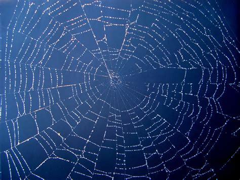 web pattern online hornet tor style dark web network allows high speed