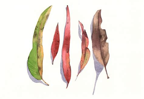 eucalyptus leaves painting e026 print of watercolor
