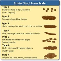 bristol stool scale chart related keywords bristol stool