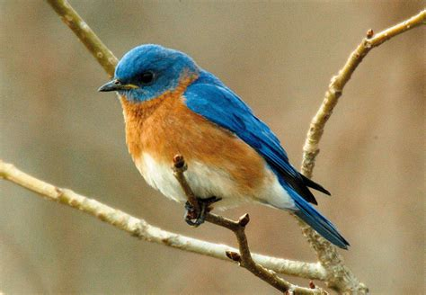 nh this weekend nature birds and orchestras new