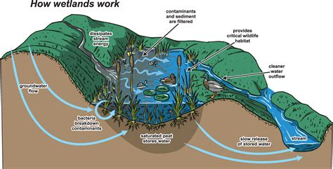 What Is Water Shed by What Is A Watershed Rdn Water Budget Project