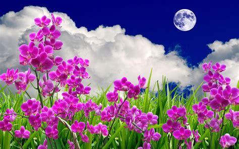 imagenes de up lindas imagens gratis lindas de amor que se mexem imagens gr 225 tis