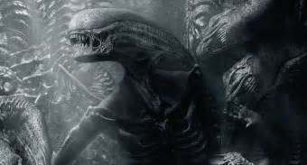 Halo Wall Mural alien covenant sequel plans revealed by director ridley scott