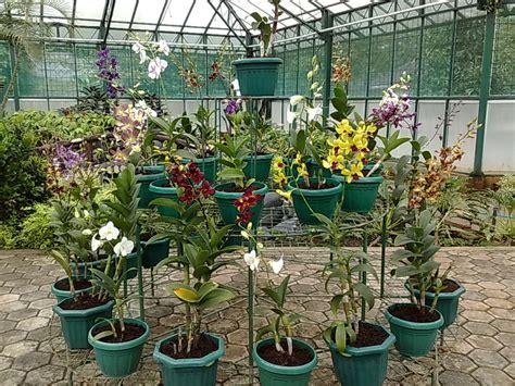 Pupuk Organik Bunga Anggrek agar anggrek cepat berbunga penyuluh pertanian kreatif