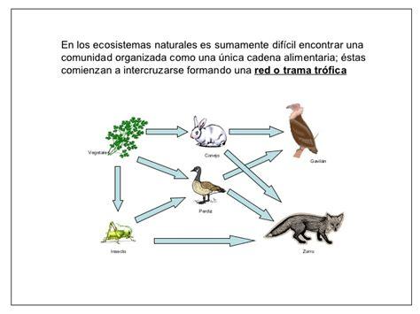 cadenas y redes troficas yahoo cadenas alimentarias y redes troficas