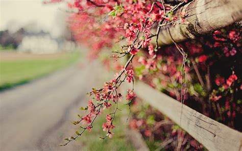 pink nature wallpaper hd pink flowers fence nature bokeh hd desktop wallpapers