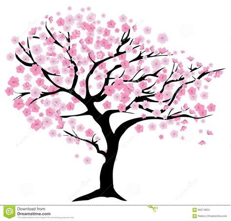 cherry tree vector cherry tree stock vector illustration of blossom design 66274854
