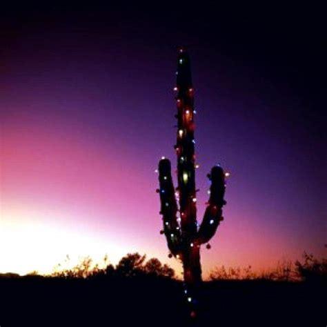 o christmas saguaro by kevin d davis