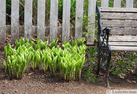 spring landscaping tips 22 spring garden design tips and beautiful spring yard