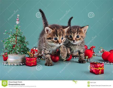 pictures of christmas stuff small kittens among christmas stuff stock photo image