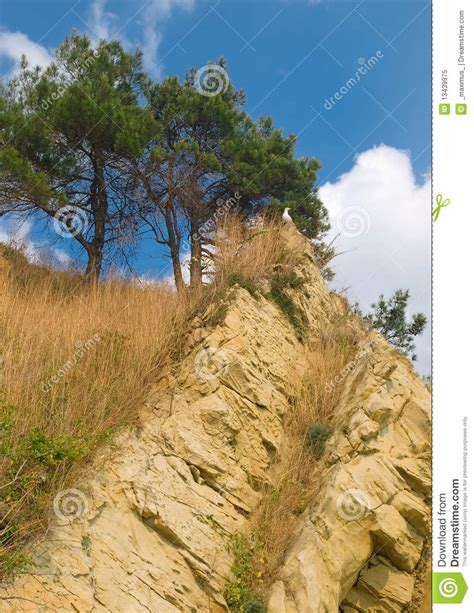 pines and rocks landscape royalty free stock photo image