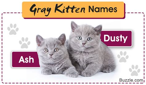 an enormous list of 100 ever so cute names for your gray