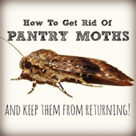 how do i get rid of moths in my bedroom thousands of ideas about pantry moths on pinterest bed