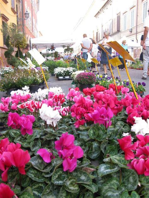 modena in fiore modena si colora d autunno nel weekend la nuova edizione