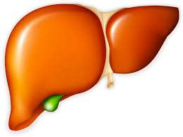 Detox Liver Gilbert S by Gilberts Argentina Pdf Ppt Reports