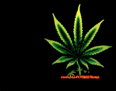 cannabis plant leaf wallpaper hd weed wallpapers