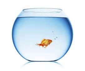 Plaque En Verre Pour Cuisine #15: Aquarium-et-poisson-rouge.jpg
