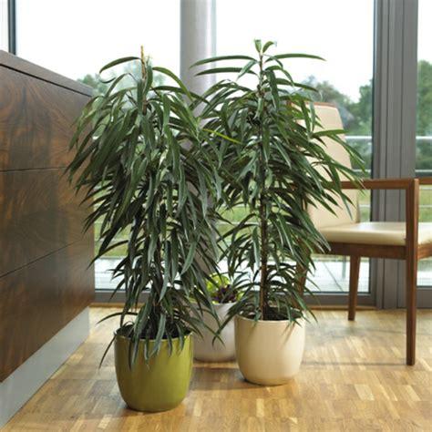 zimmerpflanze hoch zimmerpflanzen f 252 r das perfekte ambiente im haus