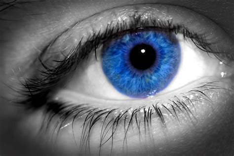 blue eyed blue images blue hd wallpaper and background photos 5833483