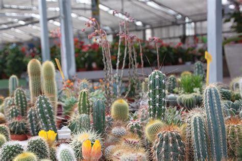 piante bonsai da interno produzione garden margherita