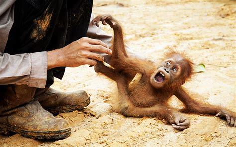 imagenes relajantes de animales las mejores fotos de animales del a 241 o 2012 ii spanish