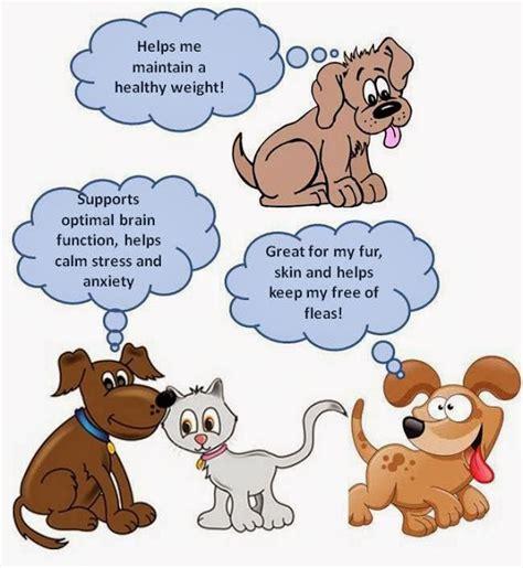omega 3 for dogs ottawa valley whisperer omega 3 omega 6 fatty acids for dogs cats health