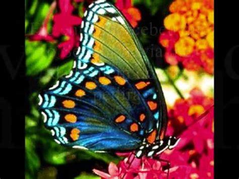 borboletas em 3d youtube a flor e a borboleta youtube