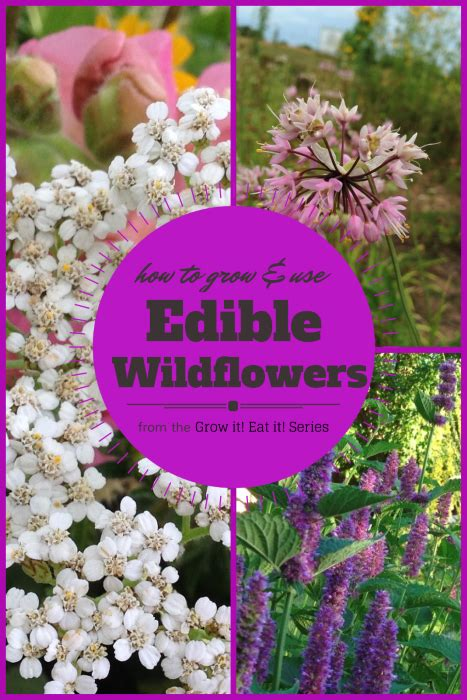 edible wildflowers grow it eat it garden therapy
