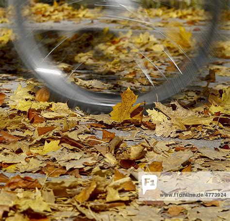Englischer Garten Fahrrad by Bayern Deutschland Englischer Garten Europa M 252 Nchen