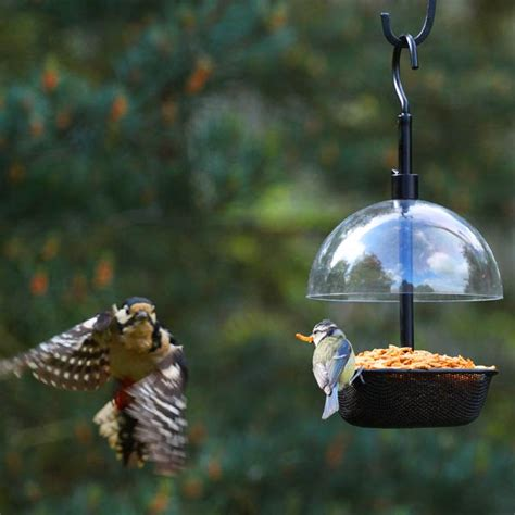 customer reviews for chapelwood squirrel dome and bird