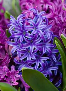 hyacinth color lameeka s with brides who are looking for the
