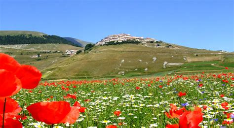 fiorita castelluccio di norcia the fiorita the flowering of castelluccio di norcia