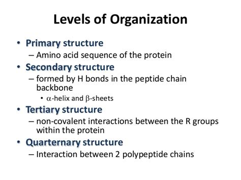 4 protein structure and function protein structure function