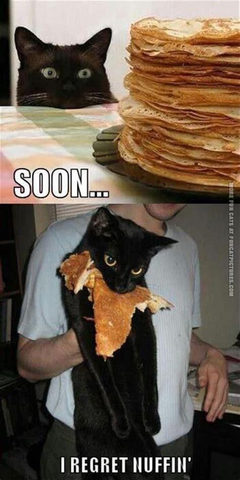 Cat Soon Meme - pancake fun cat pictures