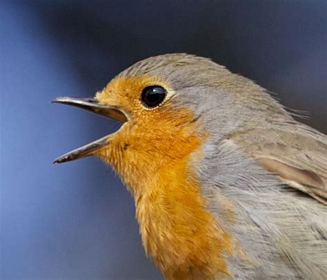 in the blink of bird s eye a model for quantum navigation