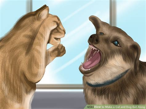 how to dogs and cats to get along how to make a cat and get along 14 steps with pictures