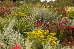 flowers in australian gardens western australian wildflowers in the botanic gardens