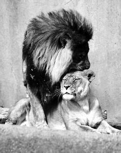 25 Best King and Queen, Lion and Lioness Love images