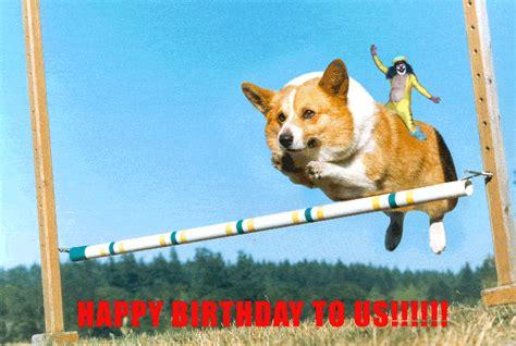 happy birthday puppy gif animated gif