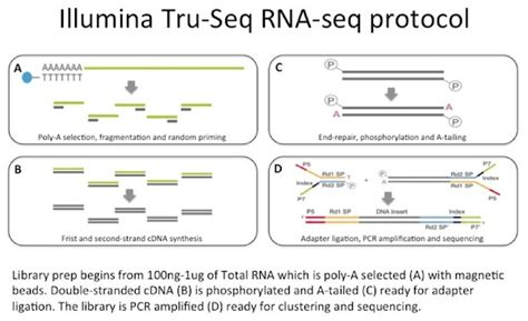 illumina sequencing protocol an introduction to rna seq bitesize bio