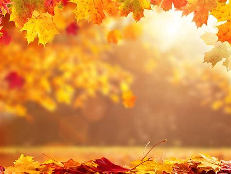 Autum In royalty free autumn pictures images and stock photos istock
